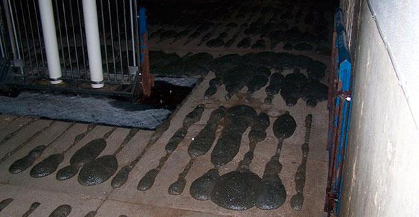 Foam creeping up through slatted flooring.