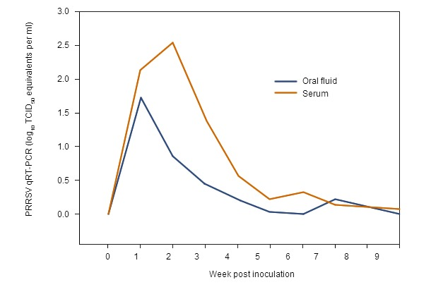 Serum and oral fluid PRRSV qRT-PCR results by post-inoculation week