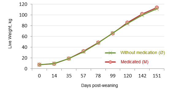 Evolution of live weight from weaning to slaughter