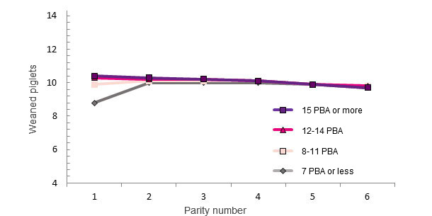 Life performance of a sow based on the number of LB at first farrowing
