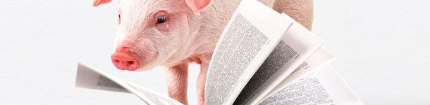 Diccionario porcino