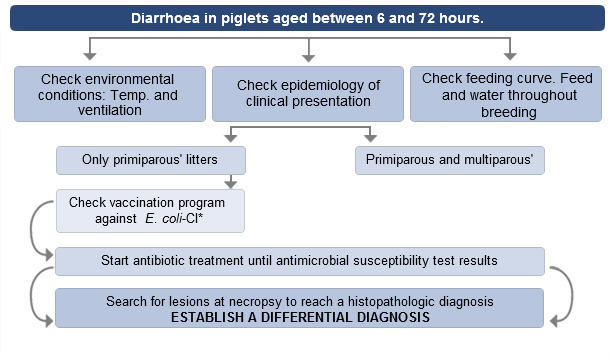 Decision making process when faced with diarrhoea in up to 72-hour-old  piglets.