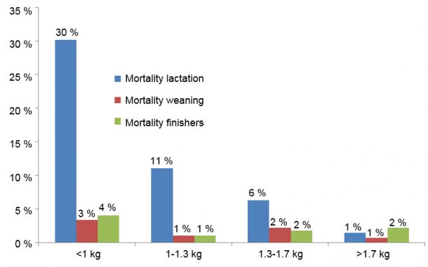 Figure 1. Mortality in each birth weight group by stage of production.