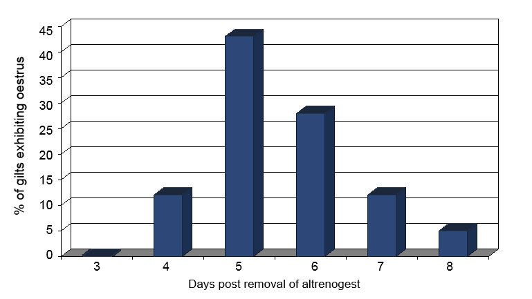 Percentage of gilts exhibiting oestrus following removal of 18 days of altrenogest