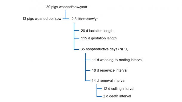 Fig. 1 Inter-relationship between NPD and other performance factors in a productivity tree for 30 pigs weaned per sow per year.