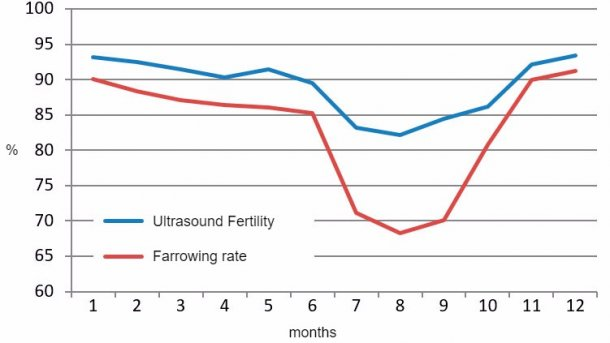 2015 monthly results for ultrasound fertility and farrowing rate.