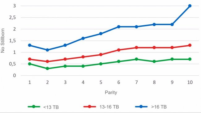 Graph 3: Average number of stillborn piglets according to parity for litters of less than 13, between 13 and 16 or more than 16 Total Born piglets. Analysis of 93.896 farrowings from hyperprolific sows recorded from October 14 to September 16