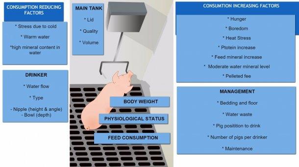 Factors affecting pig water consumption