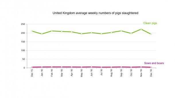 UK pig slaughterings in 2016