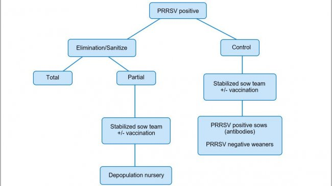 Figure 1. Schematic view of different approaches in PRRSV positive herds.