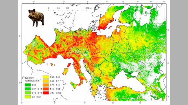 Figure 2. Estimated boar population in Europe. Source: FAO-ASFORCE, May 2015.