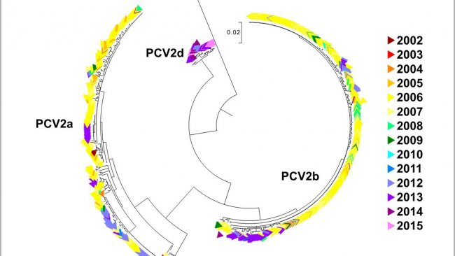 Figure 2. Maximum likelihood phylogenetic tree. The 729 ORF2 sequences from the UMN-VDL PCV2 database are colored by year acquired. The genotypes are noted.