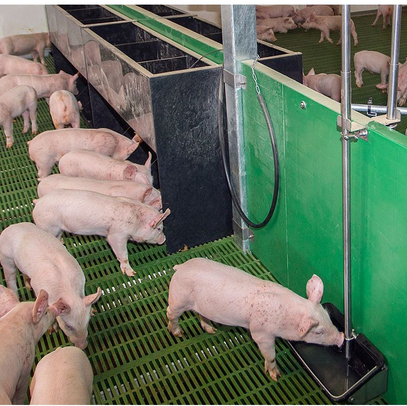 Monitoring on commercial pig farms has shown that having water near the feeder can dramatically increase pigs' feed intake.