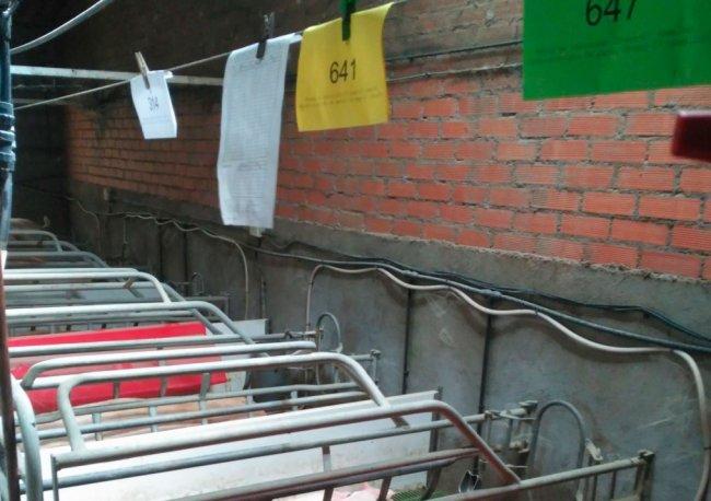 Pig production blog: swine nutrition, pig farming ...
