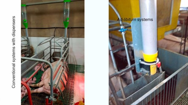 "Conventional systems with a dispenser are a good option, but they require a very good level of stockmanship, controlling whether the sows may eat more feed and modifying the dispensers daily. Ad-libitum systems pretend not to ""limit"" sow intake. Apart from this, feeding at night, when temperature drops, is helpful in warm areas or climates."
