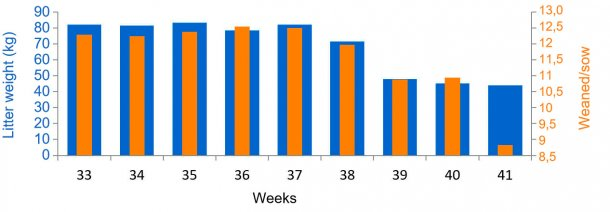 Graph 3. Average weaned/female  as piglets and kilograms of litter, before and during PED (from week 38).
