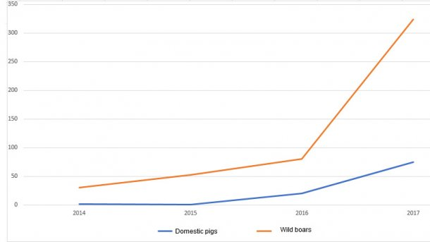 Evolution of the ASF outbreaks in domestic pigs and wild boars in Poland.