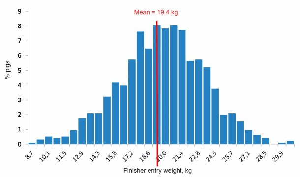 Figure 4. Weight distribution at the beginning of the growing-finishing period.