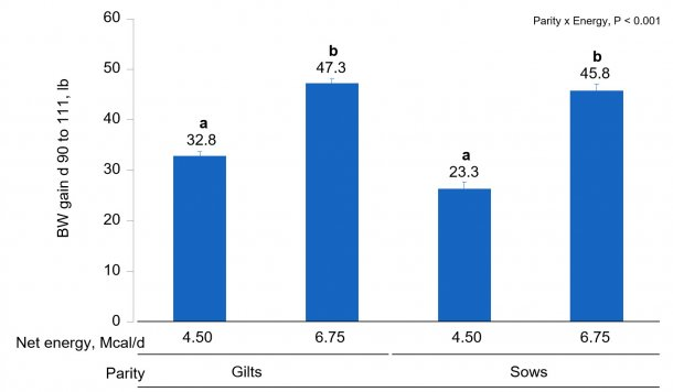 Figure 1B. Effects of different energy intake levels fed from d 90 to d 111 of gestation on BW gain of gilts and sows. Means with a different superscript within parity level differ (P < 0.05).