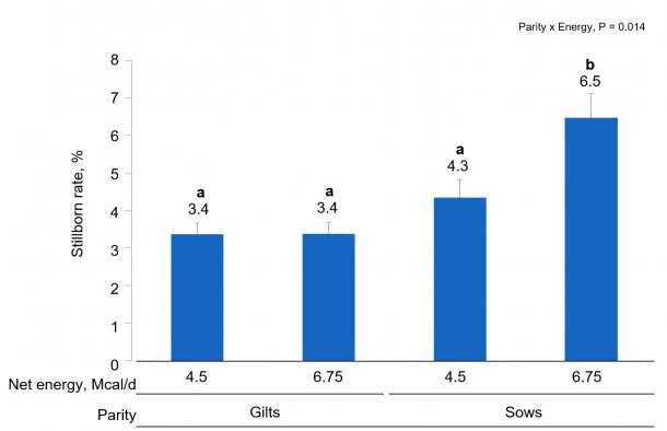 Figure 2. Effects of different energy intake levels fed from d 90 to d 111 of gestation on stillborn rate of gilts and sows. Means with a different superscript within parity level differ (P < 0.05).