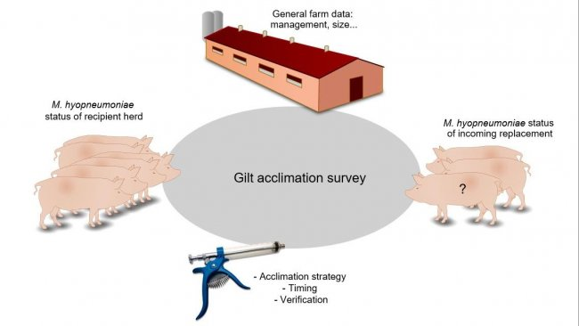Figure 1. Information related with gilt acclimation collected by the survey.