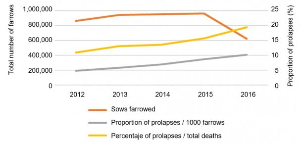 Fig 1. Total number of farrowings in the analysis and proportion of sow prolapses over time over 1000 farrows or over the total number of deaths in the farms.