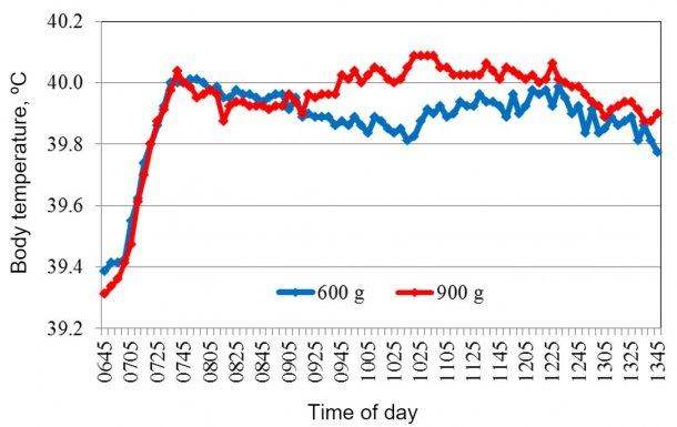 Figure 2. Average body temperature recorded after feeding at 07:00 AM.