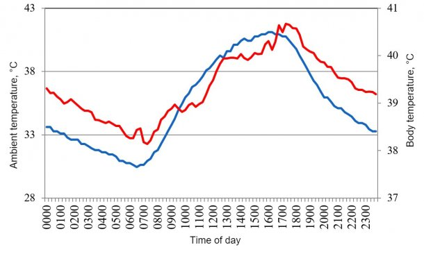 Figure 1. Variations in body temperature (red) of pigs housed under conditions of heat stress, in response to changes in environment temperature (blue) during a typical day in the summer of 2015 in the Mexicali valley (Cervantes et al., 2017 ).