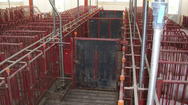 The doors in the front corridors must close every 5 stallsto allow heatdetection and mating of groups of 10 sows.