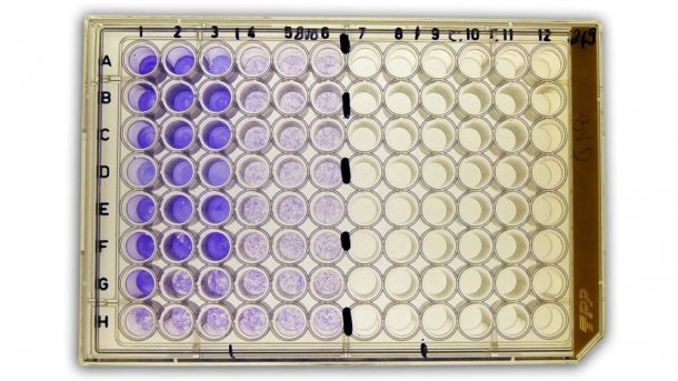 Figure 2b: Serum virus neutralization (SVN) test for detection of anti-bovine viral diarrhea virus (BVDV) antibodies in serum.