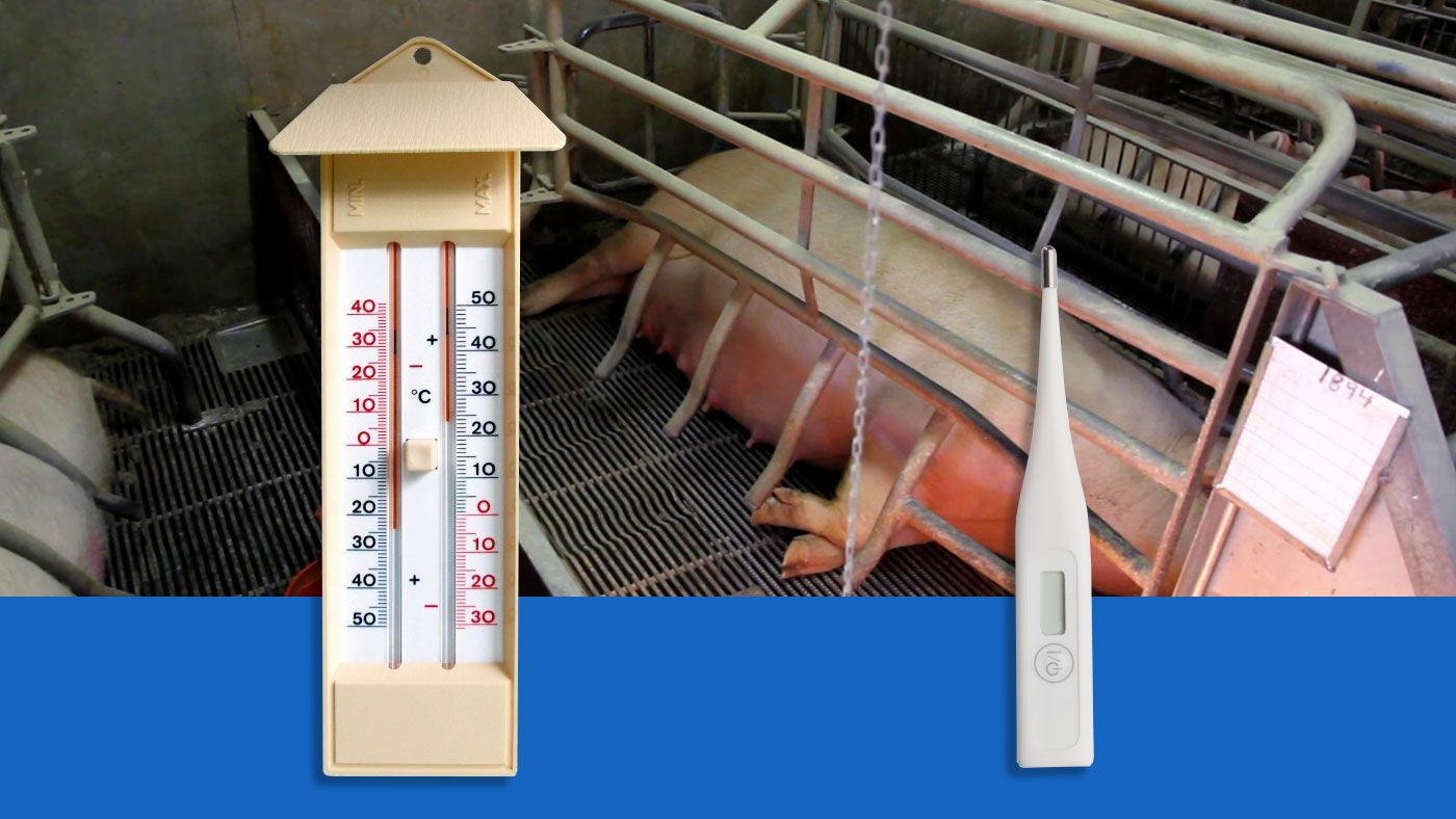 Impact of environment Tª and food consumption on a pig's body tem ...