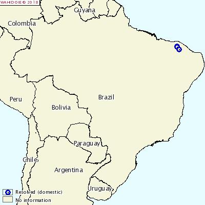 CSF in Brazil