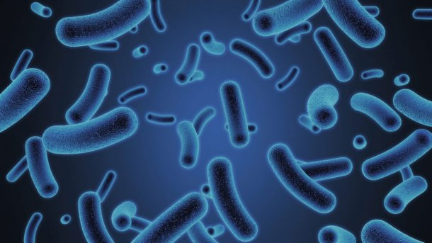 Signis - a breakthrough dual action product, designed to accelerate the development of a fibre-degrading microbiome - has been launched by AB Vista at the IPPE Expo in Atlanta, USA.