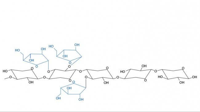 Figure 3. Chemical structure of arabinoxylans. The arabinose branches and their distribution vary depending on the cereals and between varieties of a cereal.