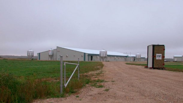 Picture 1. Pig farm. Courtesy of Super Gro Site 1 and Dr. Tim Snider.