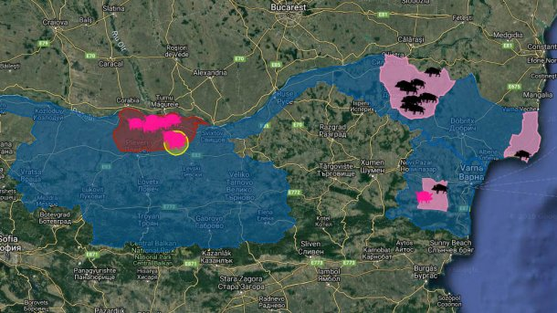 ASF outbreaks in Bulgaria since the emergence of the disease in August 2018. In domestic pigs (pink) and wild boars (black).