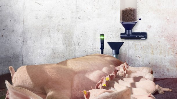 Nedap Farrowing Feeding with the optional Nedap Activator add-on can reduce feed waste and boost overall intake, resulting in a 50% reduction in farrowing pen mortality and heavier piglet weaning weights.