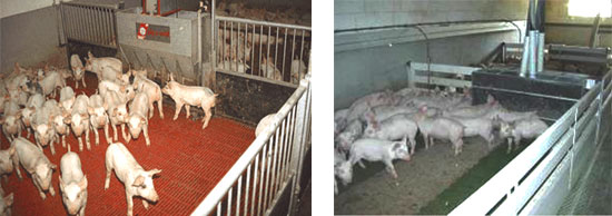 Articles Dimension And Design Of The Weaner Unit