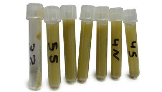 Samples of oral fluid