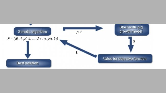 Overview of the simulation program linking a linear program for least-cost diet  formulation, a stochastic pig growth model and a genetic algorithm (GA) to findthe best feeding strategy (F) for a given objective function in a specific market situation