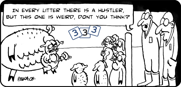In every litter there is a hustler