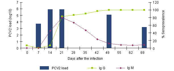 Evolution of the IgGs and IgMs response measured with a blocking ELISA (INGENASA) and of the PCV2 viremia after an experimental exposure (Segalés et al. 2005)