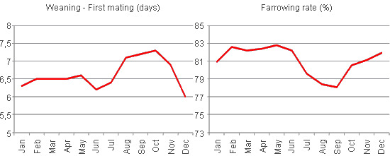 Variations in the interval from the weaning to the first mating and in the percentage of births resulting from the matings according to the month, year 2008