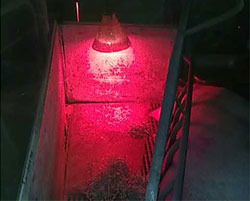 Heat lamp that bothers a sow.