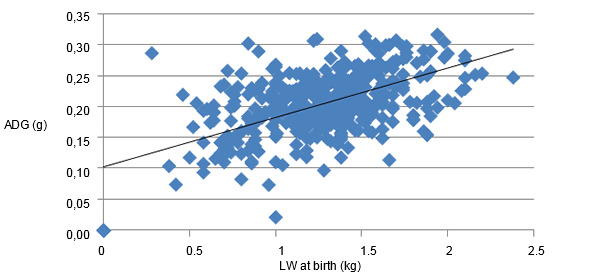 Relationship between the LW at birth and the subsequent growth