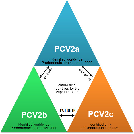 Main PCV2 genotypes and their relationship based on the capsid gene
