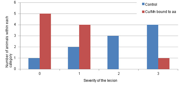 Distribution of the severity of the cartilage lesions (scale from 0 to 3) in animals pertaining to the control group or in animals that consume a diet with Cu/Mn bound to amino acids.