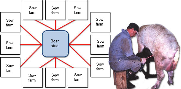 An example of the spread of PCV2 from a boar stud to commercial sow farms