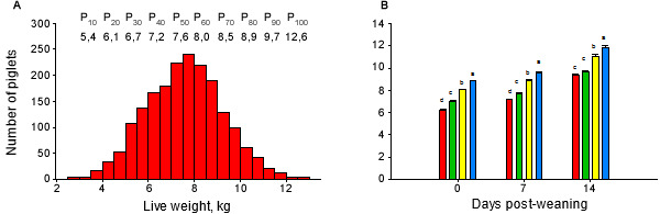 Distribution of the LW of the piglets at the end of the lactation period during 6 consecutive weaning batches (A), and initial classification and evolution of the LW along the pre-starter stage (B).