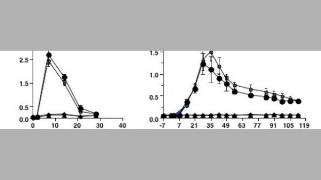 Antibody response kinetics to type 2 PRRSV infection